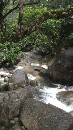 Beautiful scenery and walking trails on the Mossman gorge