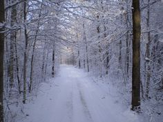 Zima zavítala aj do lesov