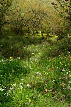 Jaargetijde: Voorjaar/Lente *Spring