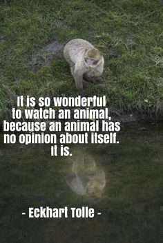 Quote by Eckhart Tolle about the being of animals... Photo: Barbary macaque at AAP rescue center.