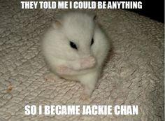 Oh My Freaking Stars!: Jackie Chan