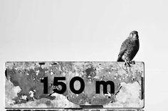 by http://ift.tt/1OJSkeg - Sardegna turismo by italylandscape.com #traveloffers #holiday |  . . . . . #gheppio #kestrel #bird #birds #nature #natura #fotografia #lanuovasardegna #photographer #photograph #photography #takeapicture #takeaphoto #pictures #canon #sardegna #italia #sardinia #italy #passion #love #landscape #paradise #cute #amazing #wonderful #pretty #cool #blackandwhite #biancoenero Foto presente anche su http://ift.tt/1tOf9XD | January 27 2016 at 08:27PM (ph catemariani7 )…