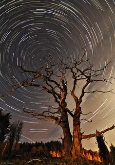 long-exposure image, star trails around the north celestial pole.Took in Sweden. Long Exposure Stars, Long Exposure Photos, Star Trails, Autumn Lights, Landscape Photography Tips, Beauty Art, Night Skies, Cool Photos, Scenery