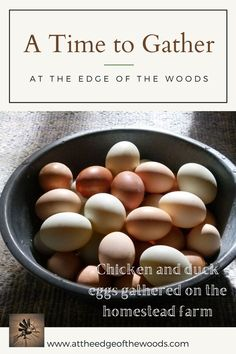 Chicken and duck eggs gathered on the homestead farm Homestead Farm, Duck Eggs, Chicken Eggs, Homesteading, Make It Yourself, Breakfast, Blog, Morning Coffee, Blogging