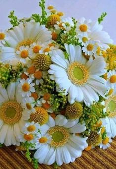 Gardens Discover weiße Margeriten und Kamille white daisies and chamomile de flores Exotic Flowers Amazing Flowers Fresh Flowers Beautiful Flowers Silk Flowers Beautiful Flower Arrangements Floral Arrangements Daisy Love Deco Floral Beautiful Rose Flowers, Beautiful Flower Arrangements, Flowers Nature, Exotic Flowers, Amazing Flowers, Fresh Flowers, Silk Flowers, Spring Flowers, Floral Arrangements