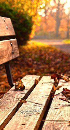 Gocciola fuoco dai rami imporporati d'autunno. - Mary
