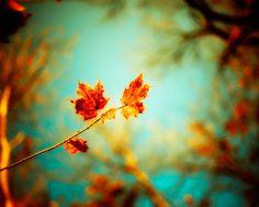 Autumn photography burnt orange leaves fall decor autumn wall art maple forest woodland print turquoise sky blue green - Rusty Glow 8x10. $30.00, via Etsy.