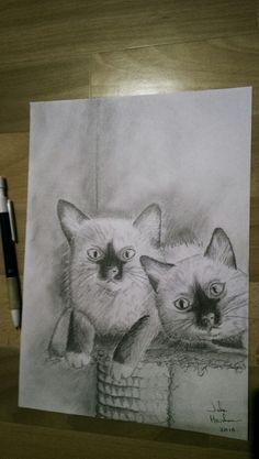 Ragdoll kittens pencil drawing