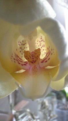 #Orchid
