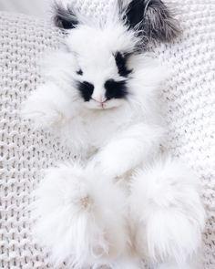 The world's cutest bunny.