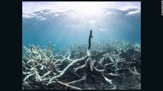 """Some of the bleaching of reefs in the northern section has been described as """"extreme."""""""
