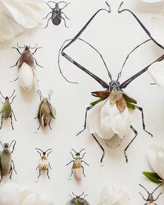 Magnolia and Bug illustration No. 6672 van kariherer op Etsy