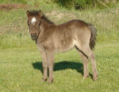 We had a little mini when I was young...named him Little Breeze...he looked like this one.