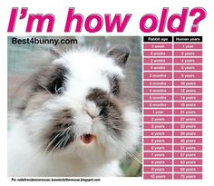 Rabbits can live up to 10+ years if properly cared for. Find out what your rabbits age is with this fun chart🐇🐰