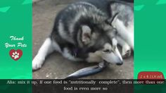 Food for Alaska Things you should to know   Thank Your Pets https://youtu.be/UCPeBKej6YU  See all playlist about dogs here https://www.youtube.com/playlist?list=PL03-l_F12aWTiDs5XXTel9GL5sd_8kMhv  Thank your for watching. Please Subscribe us at https://www.youtube.com/user/Mirianpamu97039/about follow us on: Facebook: http://ift.tt/2dzQEaJ https://twitter.com/ZeiglerLydia http://ift.tt/2d9Qclq http://ift.tt/2dzQujG