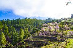 La Palma. Todo un paisaje de contrastes.