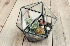 Do It Yourself >> Terrarium