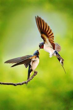 Beautiful capture by Faye Wong