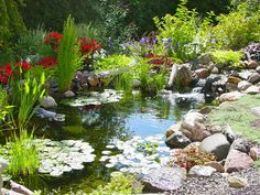 Beautiful Koi Pond with Decorative Planters