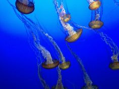 Monterey Bay Aquarium in #California.