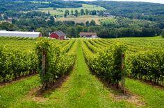 Nova Scotia Vineyards- quite popular in the Annapolis Valley area.
