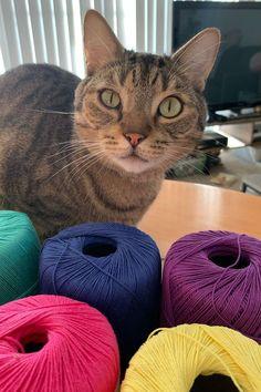 Pianissimo Mitts Knitting Pattern Download Bean Bag Chair, Knitting Patterns, Wordpress, Cats, Diy, Animals, Decor, Gatos, Animales