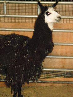 Xteri, October 2009