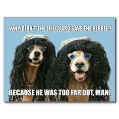 Shop Funny Golden Retriever Lifeguard Hippie Joke Postcard created by AugieDoggyStore. Personalize it with photos & text or purchase as is! Funny Work Jokes, Dog Jokes, Funny Puns, Work Humor, Funny Stuff, Funny Things, Stupid Funny, Funny Quotes, Daily Jokes