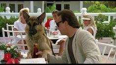 James Belushi, K-9 1980s Films, Corgi, Movies, Animals, Corgis, Animales, Films, Animaux, Cinema