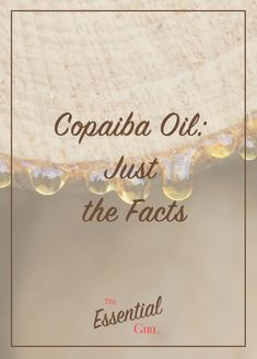 What are the REAL benefits of copaiba oil? If you're searching the internet to find out, you're probably finding a lot of different answers. That's why I created this post, which explains the benefits of copaiba oil according to science. Click the image to read more! Copaiba Oil, Copaiba Essential Oil, Essential Oil Uses, Young Living Copaiba, Young Living Oils, Young Living Essential Oils, Doterra Oils, Aromatherapy Oils, Searching