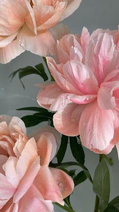 Flowery Wallpaper, Flower Phone Wallpaper, Pink Wallpaper Iphone, Aesthetic Pastel Wallpaper, Aesthetic Wallpapers, Flower Aesthetic, Pink Aesthetic, Flower Backgrounds, Wallpaper Backgrounds
