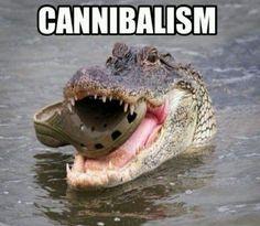 Croc ate meh Croc