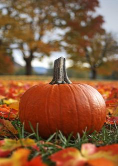 Fall - A perfect pumpkin :)