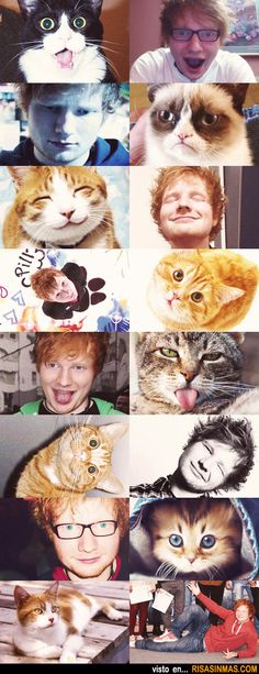 Imitando caras de gatos.