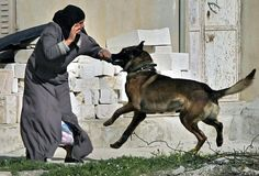 Palestinian attacked by Israeli soldiers dog