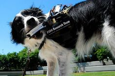A new dog vest developed by Georgia Institute of Technology could help service dogs share valuable information with their handlers.