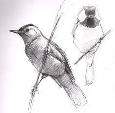 Gray catbird, black-capped chickadee, Petersham, MA