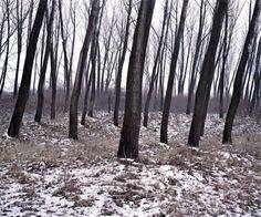 Green Silence par Daniel Kovalovszky