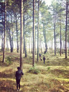 Ravens point Forrest