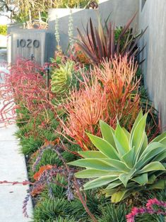 Tropical Landscaping 16