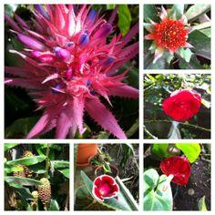 del jardin