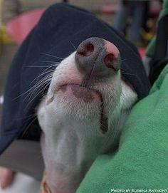 Love dog snouts!