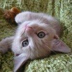 kittens! #kittens