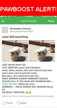 Please spread the word! Missy was last seen in San Fernando, CA 91345.  Message from Owner: I will never stop looking for you Missy. If you see her or know someone who may have her PLEASE NOTIFY HER FAMILY. We miss her and we love her. You will know Missy if you see her. Her eyes are rare for her breed. They are so uncommon people would ask me did I put contacts on her😳. It has been so long I don't know how she looks now. Help.   Nearest Address: Near Mayall St & Wisner Ave