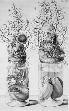 The Embalming Jars of Frederik Ruysch From Thesaurus animalium primus  1710