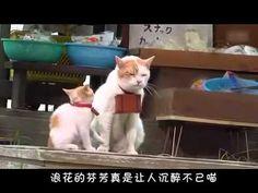 喵师父和喵徒弟的夏日旅行 中文字幕  にゃらん 師匠と弟子の旅
