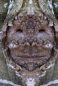 Dream Creatures: Reflected Images of Tree Bark Reveal the Faces Hiding in the Forest How To Make Trees, Weird Trees, Tree Plan, Tree People, Tree Faces, Unique Trees, Old Trees, Bizarre, Tree Sculpture