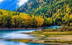 Lataa kuva Aasiassa, syksy, Kanas Lake, metsä, Xinjiang, Kiina