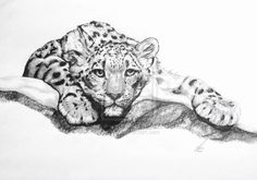 Reference from a book, Derwent Watersoluble Sketching Comments and advices are welcome! Animal Paintings, Animal Drawings, Snow Leopard Habitat, Tiger Silhouette, Big Cat Tattoo, Tiger Artwork, Tiger Drawing, Lion Art, Stuffed Animal Patterns