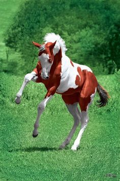 Beautiful foal jumping and playing around, so cute!